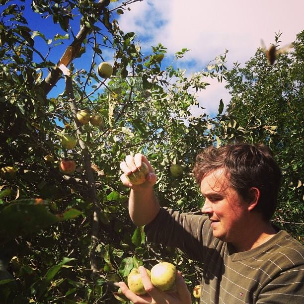 PDC Teacher Jesse Tack foraging  for apples