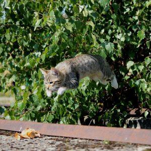 cat-913059_960_720[1]