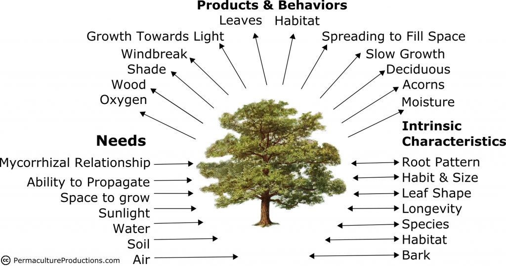 Permaculture Design - Needs Products Behaviors & Intrinsic Characteristics of an Oak Tree